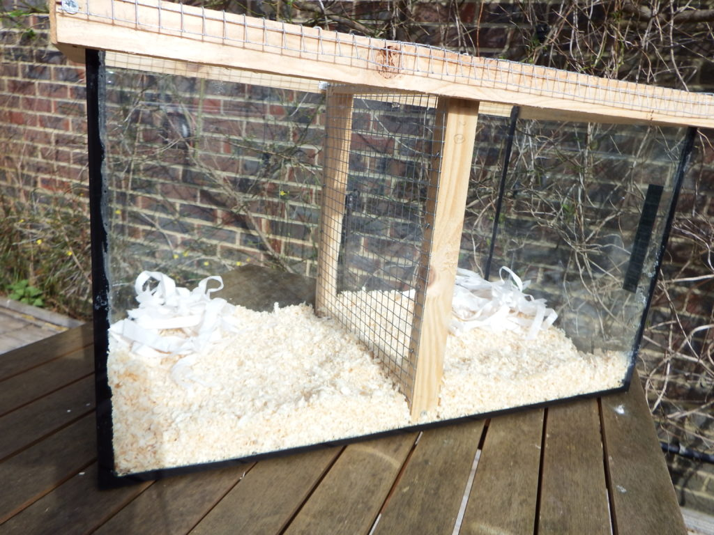How to Split Cage a Gerbil images
