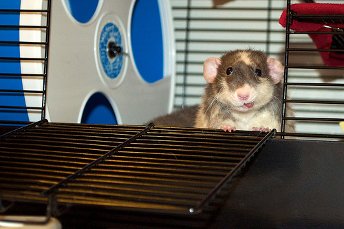 What Is Gerbils Lifespan? – Rodent Zone