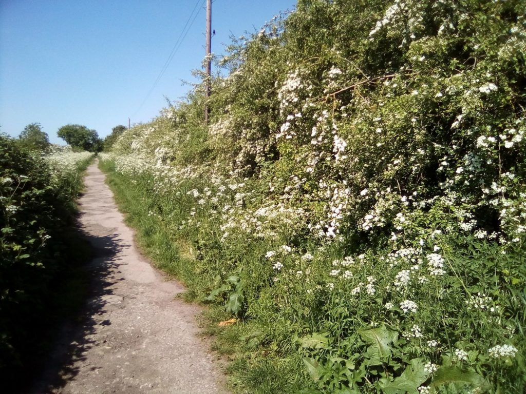 You Need To Do Is Find Yourself A Nice Footpath That Has Variety Of Hedges And Trees Alongside It Something Like The Images Below Places Near Me